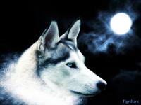 avatar de Raynor91