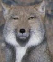 avatar de Grugby