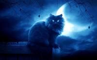 avatar de DJShadow
